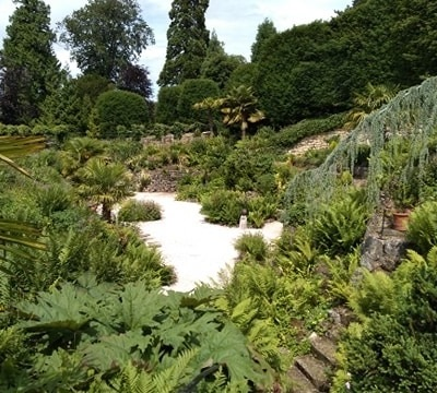 Brodsworth Ferns 1
