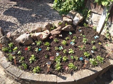 Ellie's garden